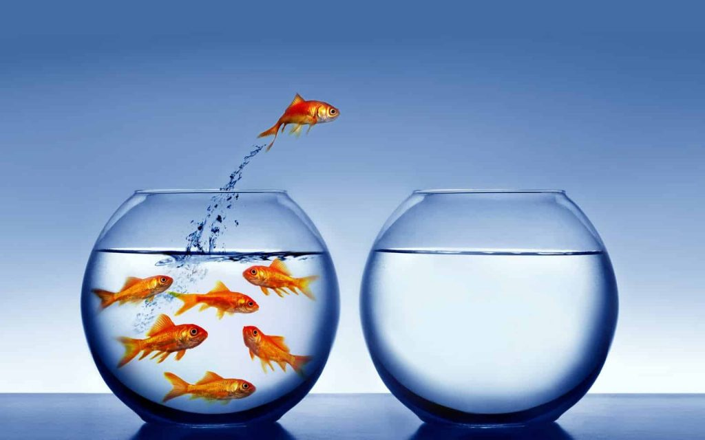 A goldfish jumping out of the water, from the crowded jar to the empty one.